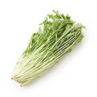 サラダでシャキッ! 篠崎さんの有機水菜(千葉県産)